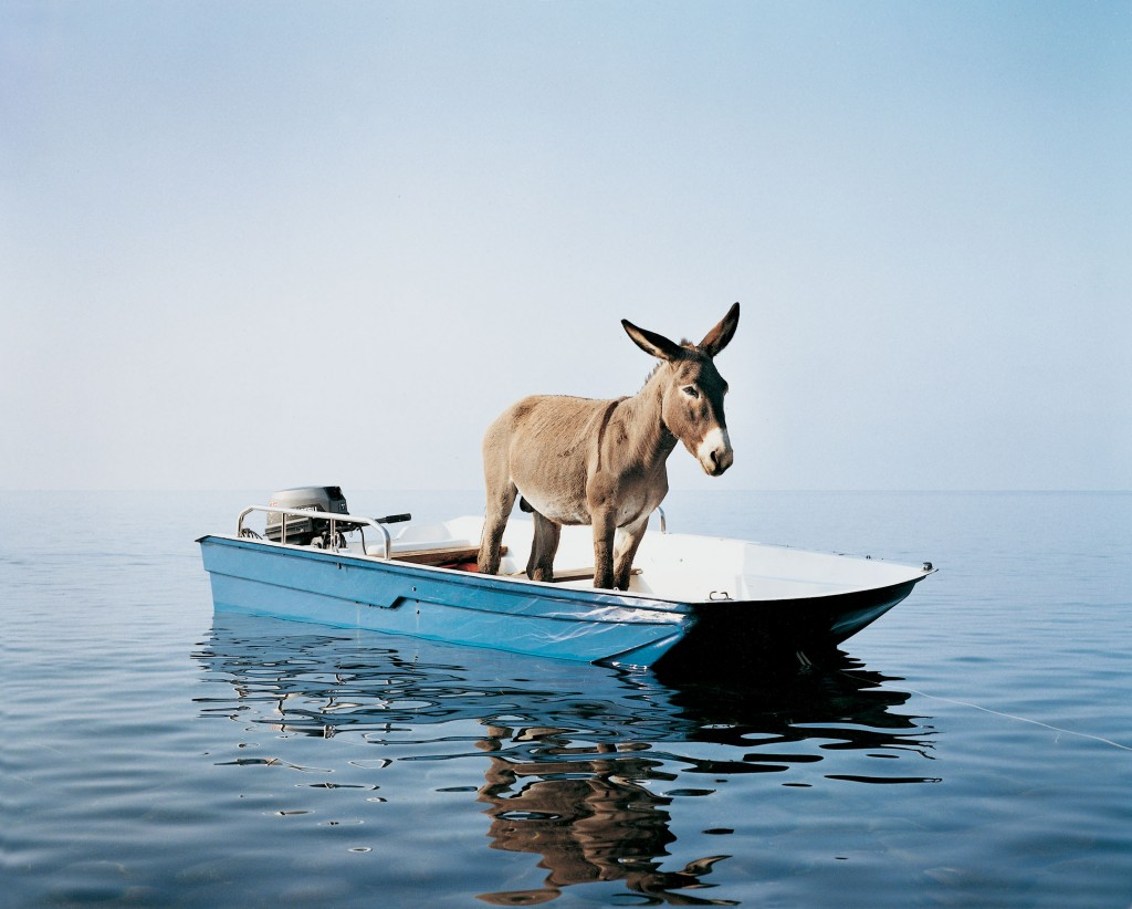 asino barca